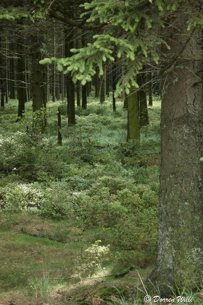 Ballade dans les Hautes fagnes et les sous-bois le 10-08-2011 Img_2640-800x600--2bbd67f