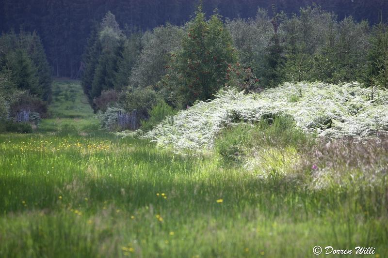 Ballade dans les Hautes fagnes et les sous-bois le 10-08-2011 Img_2893-800x600--2bbda4b