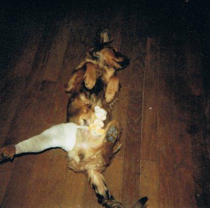 Mon chien Voyou, mes bébés à plumes et compagnie E-et-cie-vouyou-05-2b609a0
