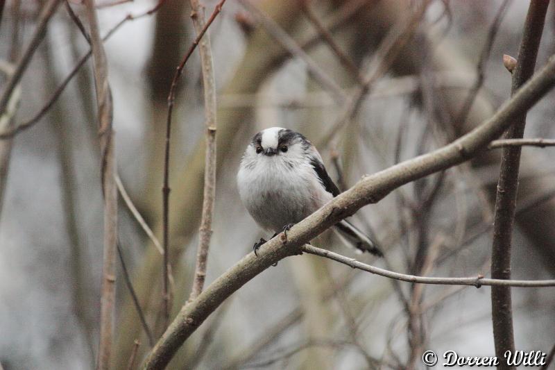PHOTOS DU 16 février 2012 longues queue Dpp_-m-langes---0005-31a8268