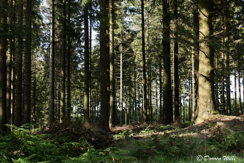 Ballade dans les Hautes fagnes et les sous-bois le 10-08-2011 Img_3030-800x600--2bbdb4a